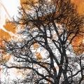 ohne Titel, 2016, Mischtechnik auf Holz, 70 x 30 cm